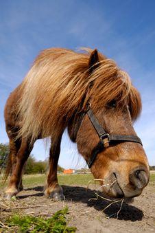 Free Horse Royalty Free Stock Photo - 5693115