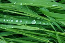 Grass, Dew Stock Photography