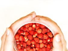 Free Wild Strawberries In A Cup Stock Images - 5693254