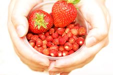 Wild Strawberries & Strawberries In A Cup Stock Image