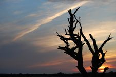 Free Sunset Tree Stock Image - 5693321