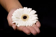 Free Flower In A Hand Royalty Free Stock Images - 5693939