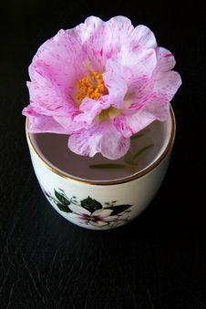 Free Pink Flower Royalty Free Stock Photo - 5694175