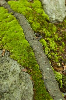 Free Green Moss Royalty Free Stock Images - 5694179