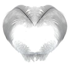 White Feather Heart Stock Photo