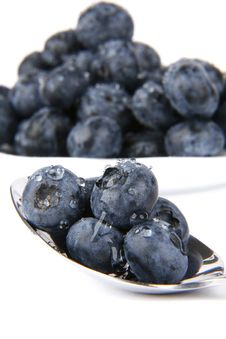 Free Bilberries Royalty Free Stock Photography - 5695327