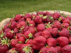 Free Close Up Of Strawberries Stock Photos - 5696263