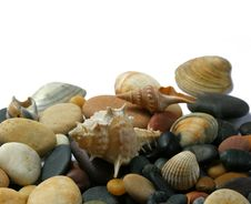 Free Seashells  And Stones Royalty Free Stock Photography - 5696927