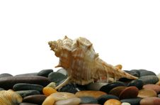 Free Seashell And Stones Stock Photography - 5696952