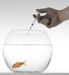 Free Goldfish With Syringe Royalty Free Stock Photos - 5696998