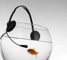 Red Fish Listenig Music Royalty Free Stock Photos