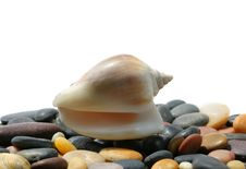 Free Seashell And Stones Stock Photos - 5697233