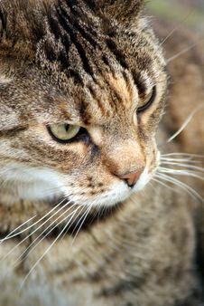 Cruel Cat Stock Image