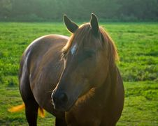 Free Horse1 Stock Images - 5698014