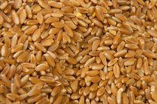 Free Rice Stock Photos - 5698453