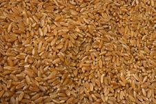 Free Rice Royalty Free Stock Photo - 5698455