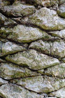 Rough Bark Of Palm Tree Stock Image