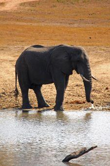 Free Elephant In Sabi Sands Stock Photo - 5699470
