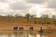 Free Elephant In Sabi Sands Stock Photography - 5699542