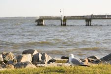 Free Seagull And Pier Royalty Free Stock Photography - 5699897