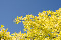 Free Yellow Leaves Stock Images - 56995474