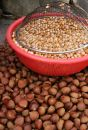 Free Roasted Walnuts Stock Photo - 573890
