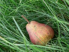 Free Pear In A Grass Stock Image - 570361