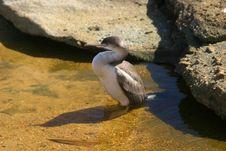 Free Seabird Resting Stock Image - 571001
