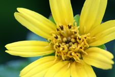 Free Yellow Flower Stock Photography - 571222
