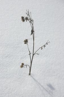 Free Winter Plant, Flower Stock Photography - 571582