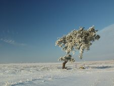 Free Winter Tree Stock Images - 573364