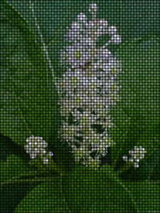 Free Whiteflower Royalty Free Stock Photo - 573715