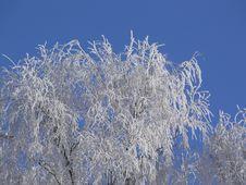 Free White Frost Royalty Free Stock Photo - 576475