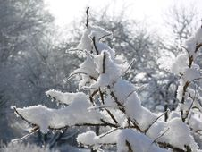 Free Bush In The Snow Royalty Free Stock Photography - 576477