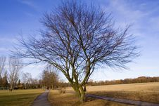 Free Park And Tree In Spring Royalty Free Stock Photo - 576705