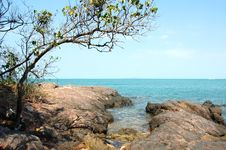 Free Beach With Big Stones And A Tree Royalty Free Stock Photo - 577885
