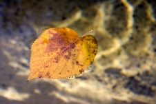 Free Floating Leaf Stock Photo - 578400