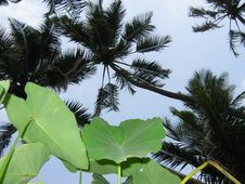 Free Leaves And Palms, Indian Coast Stock Photos - 578833