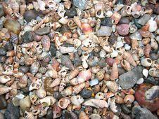 Free Shells On Indian Coast Royalty Free Stock Images - 578839