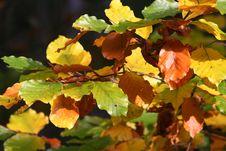 Free Autumn Trees, Poland Stock Photo - 578970