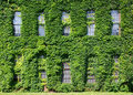 Free Ivy-covered Wall Stock Photography - 5704612