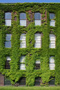 Free Ivy-covered Wall With Windows Vertical Royalty Free Stock Photo - 5704685