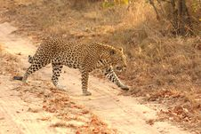 Free Leopard In The Sabi Sands Stock Images - 5700244