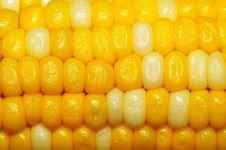 Free Corn Royalty Free Stock Image - 5700666