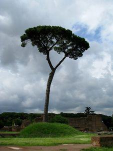 Free Cyprus Tree Stock Photography - 5700772