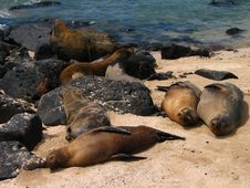 Free Sleeping Sea Lion Stock Photo - 5701070