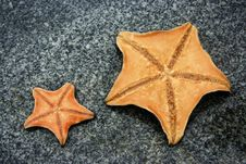Free Starfish Royalty Free Stock Photography - 5701417