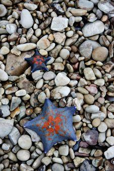 Free Starfish Stock Image - 5701641