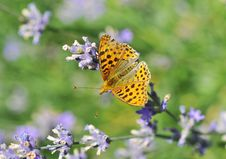 Free Butterfly Stock Photo - 5702250