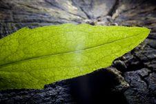 Free Leaf Stock Images - 5703274